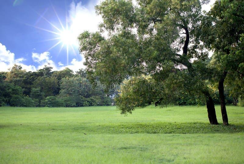 Tuin met de hemel stock fotografie
