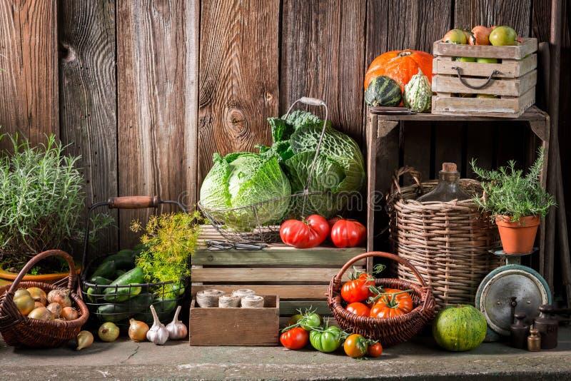 Tuin met geoogste groenten en vruchten royalty-vrije stock foto