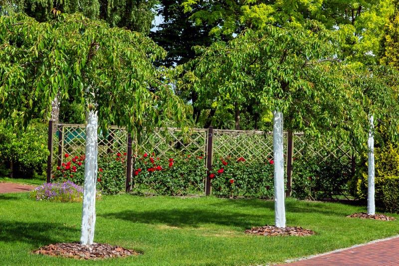 Tuin met geplante jonge vergoelijkte bomen op de achtergrond een roze tuin royalty-vrije stock foto