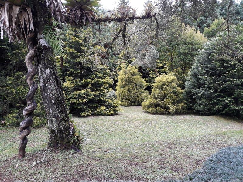 Tuin met mooie en oude bomen royalty-vrije stock foto