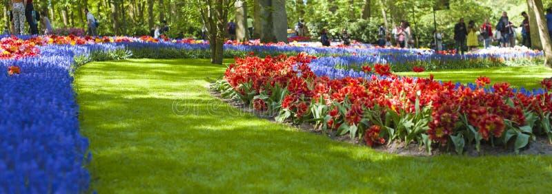 Tuin met roze hyacinten en kleurrijke tulpen op een zonnige dag in de lente banner royalty-vrije stock foto