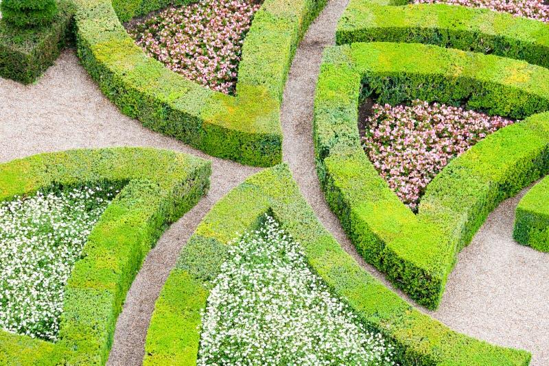 Tuin met vele verschillende soorten bukshout royalty-vrije stock fotografie