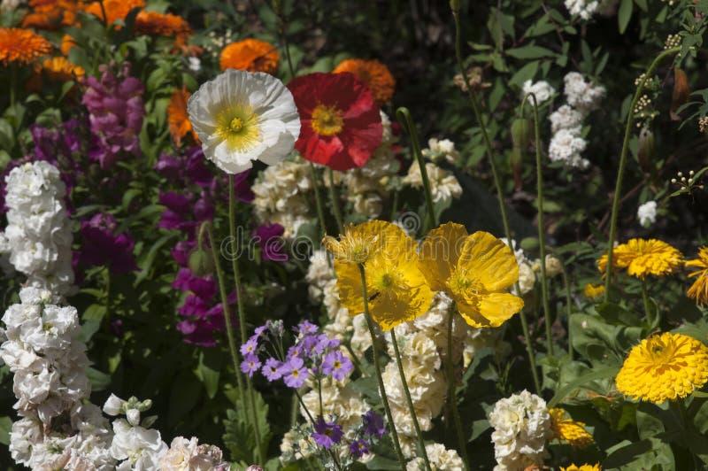 Tuin van de lentebloemen stock afbeeldingen
