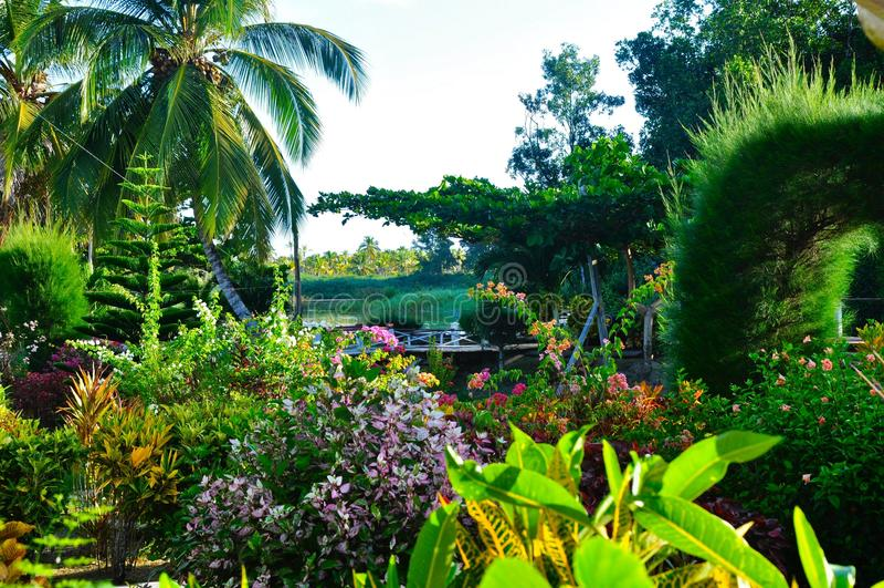 Tuin van Guyana royalty-vrije stock foto