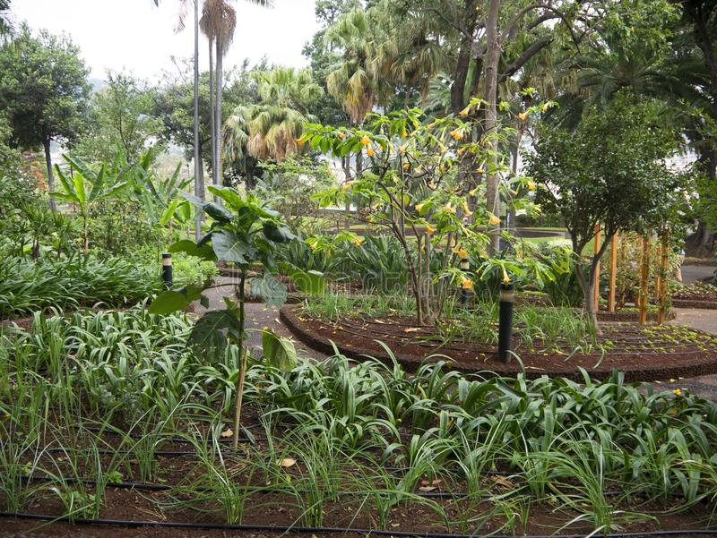Tuin van het Gouverneurspaleis op het Eiland Madera Portugal stock afbeelding