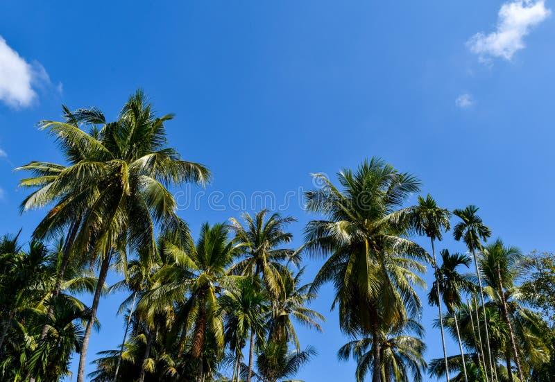 Tuin van kokosnoot door de filosofie van de voldoende hoeveelheidseconomie in het platteland van Thailand royalty-vrije stock foto's