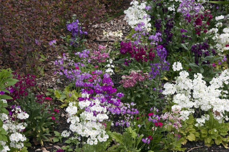 Tuin van vroege de lentebloemen stock foto