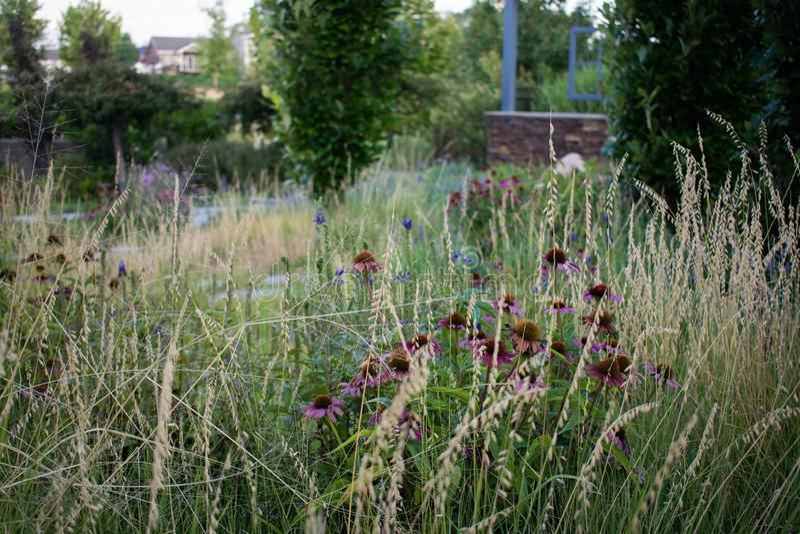 Tuin Wildflowers in Gras stock foto