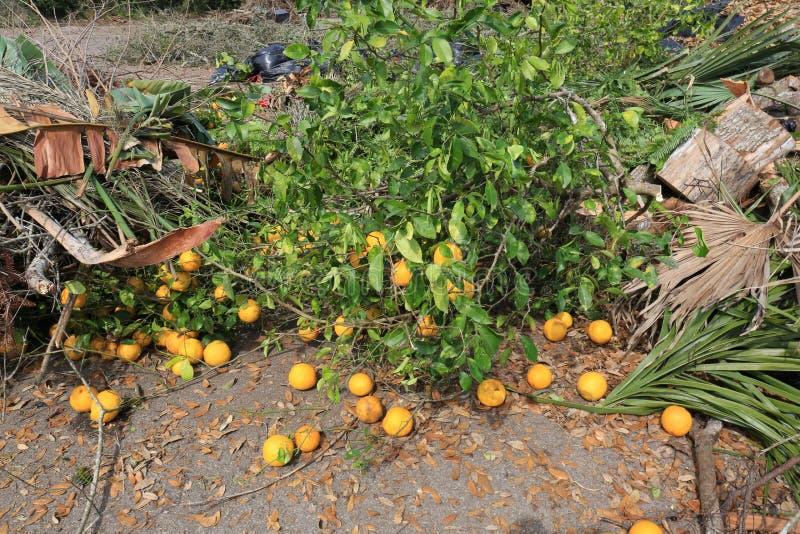 Tuinafval bij Stortplaats, Stortplaats met Sinaasappelen royalty-vrije stock foto