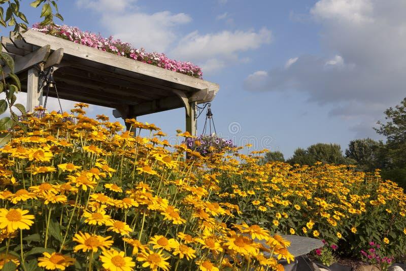Tuinbloemen en Pergola met heldere blauwe hemel en gele madeliefjes stock foto