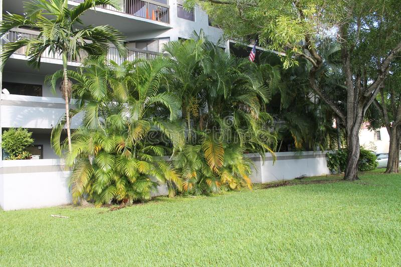 Tuinbomen bij de flatgebouw met koopflatsbouw in de voorsteden stock foto