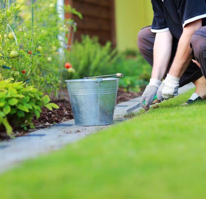 Tuinbouw - onkruid verwijderen uit het voetpad in de tuin royalty-vrije stock foto's