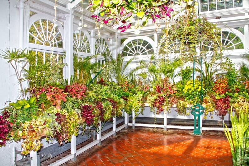 Tuinbouwinstallaties en bloemen stock afbeelding