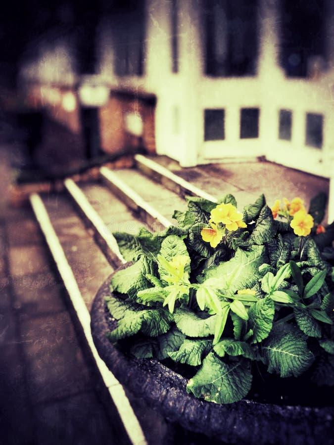 tuinen royalty-vrije stock afbeelding
