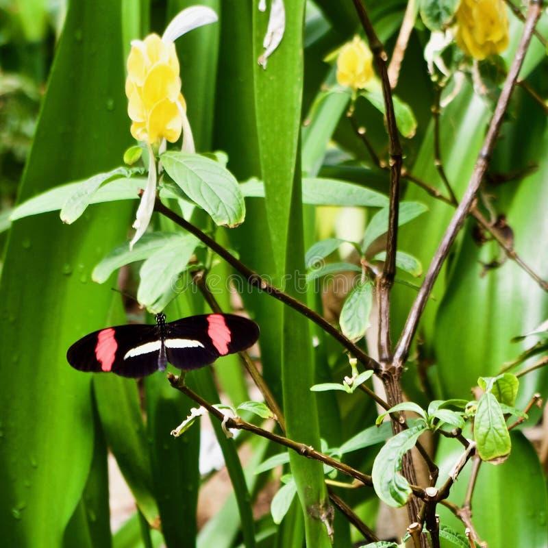 Tuinen bij de Universiteit van Alberta Botanical Gardens, Alberta, Canada royalty-vrije stock foto
