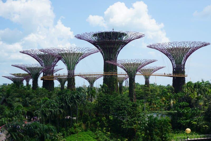 Tuinen door de Baai - Singapore stock foto's