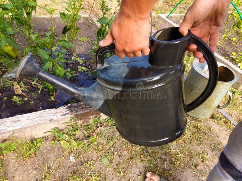 Tuingieter die de installatie in de tuin water geven stock afbeelding