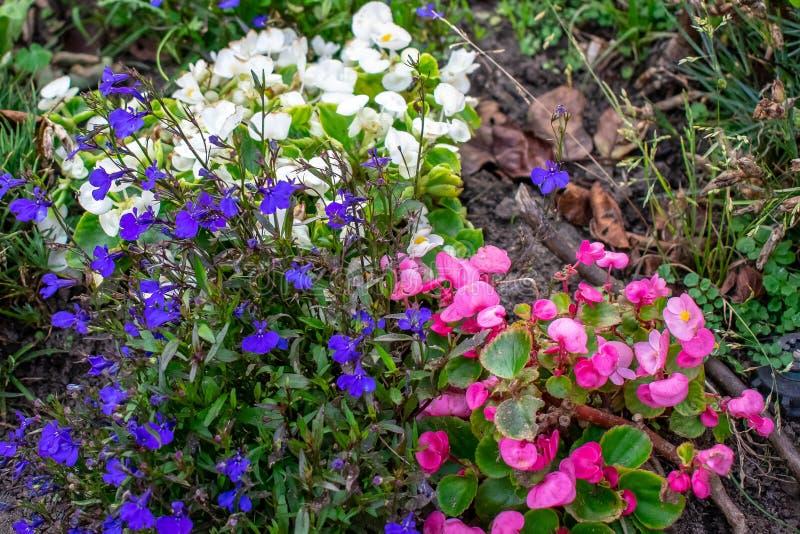 Tuinhoogtepunt van kleine bloemen stock afbeeldingen