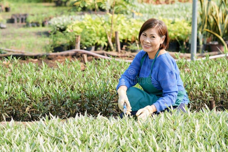 Tuinierende hogere vrouw royalty-vrije stock foto