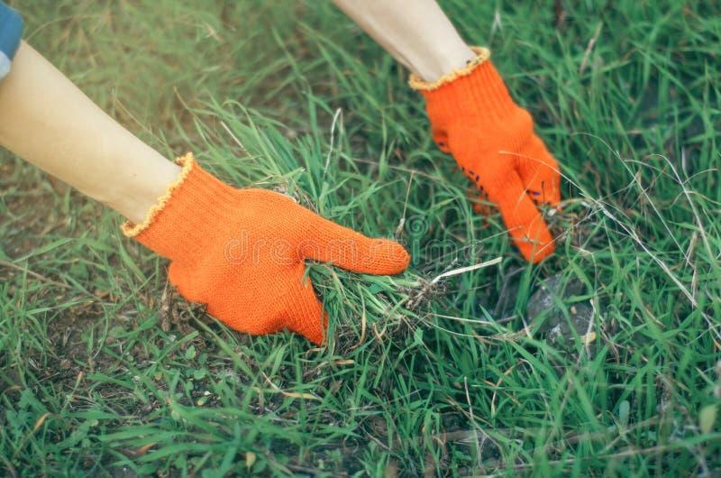 Tuinierende vrouwentuinman in handschoenen in de tuin stock fotografie
