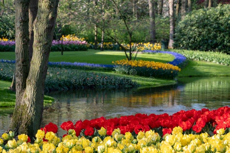 Tuiniert de helder gekleurde tulpen door het meer in Keukenhof, Lisse, Nederland Keukenhof is genoemd geworden Tuin van royalty-vrije stock afbeelding