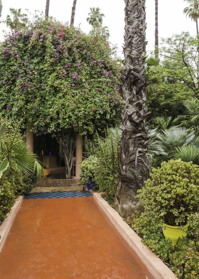 Tuiniert majorelle op een regenachtige dag stock afbeelding