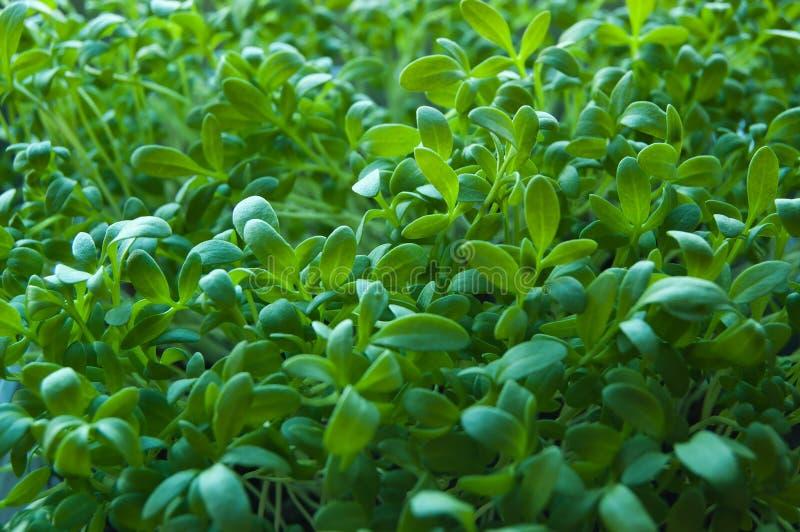 tuinkers stock afbeeldingen
