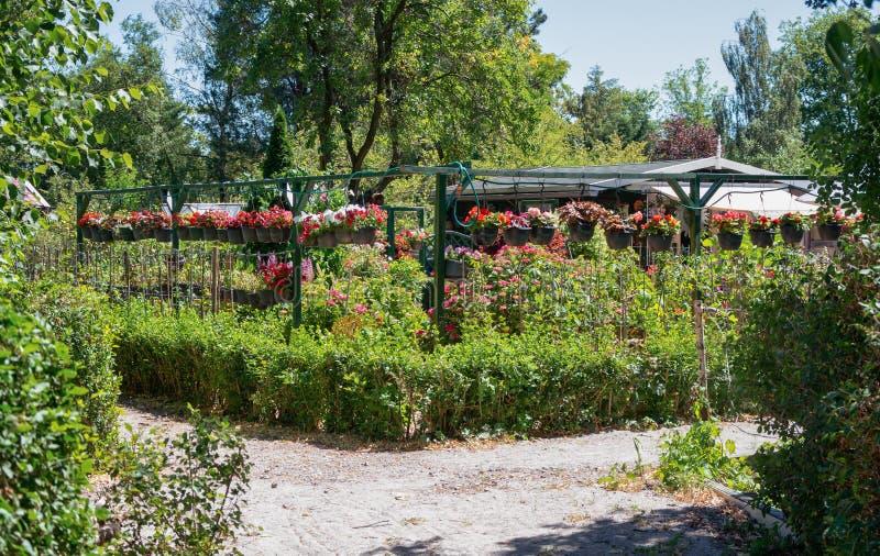 Tuinloods door hangende die manden wordt met begonia ` worden gevuld omringd die royalty-vrije stock foto's