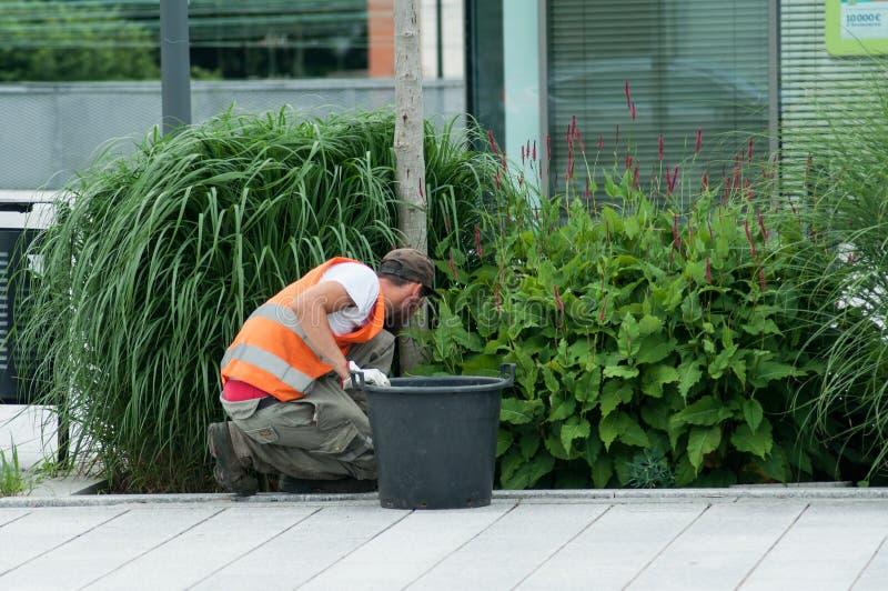 Tuinman die afval in installatiebedden verwijderen royalty-vrije stock afbeeldingen