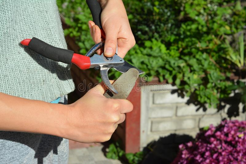 Tuinman schoonmakend en scherpend tuinhulpmiddel in de herfst stock foto