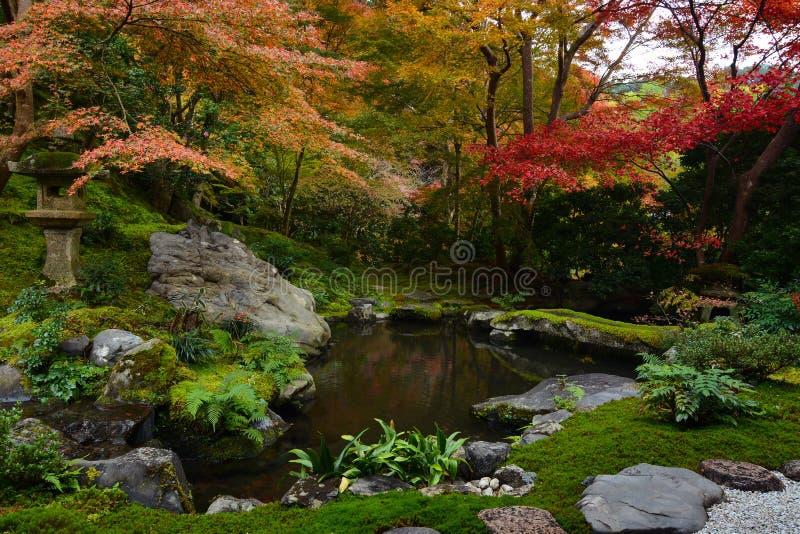 Tuinvijver in Kyoto, Japan met weelderig groen mos en de rode bomen van de dalingsesdoorn stock foto