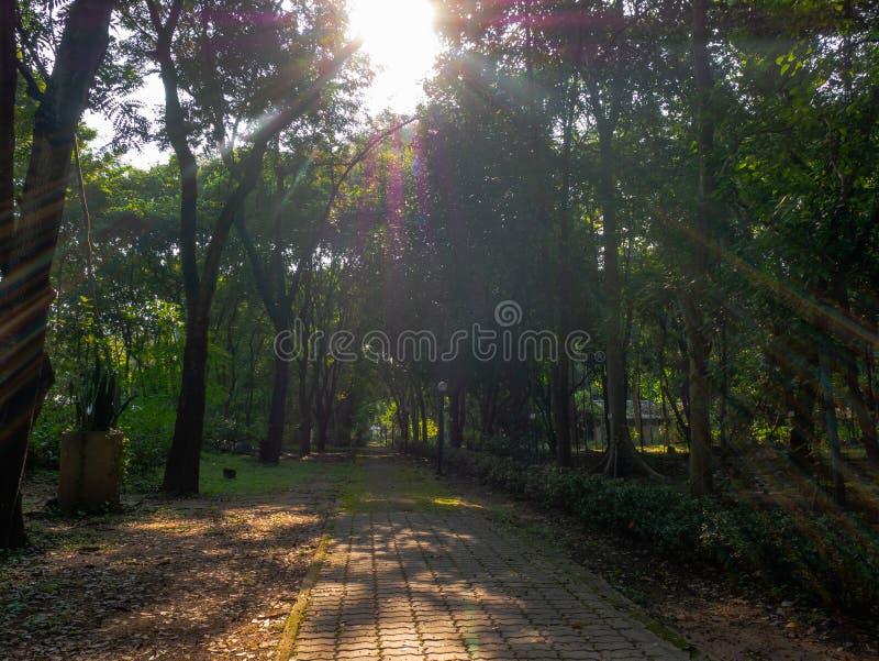 Tuinweg en licht en zonneschijn in ochtend stock afbeelding