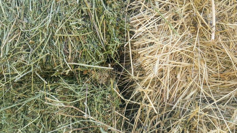 Tuk соломы, трава сена в 2 частях, свежий зеленый цвет и сухой старый желтый цвет стоковые изображения