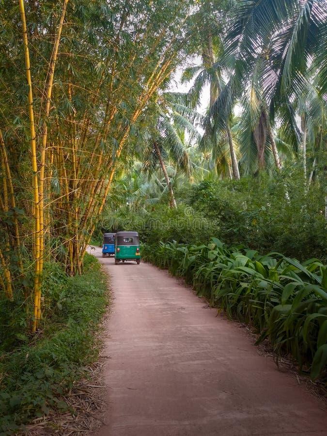 Tuk Tuk no bambu e no sulco das palmeiras fotos de stock royalty free