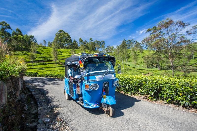 Tuk Tuk in Tea field plantations, Sri Lanka. Tuk Tuk Rikshaw going through Tea field plantations in the mountain area in Lipton`s Seat,Haputale, Sri Lanka stock photo