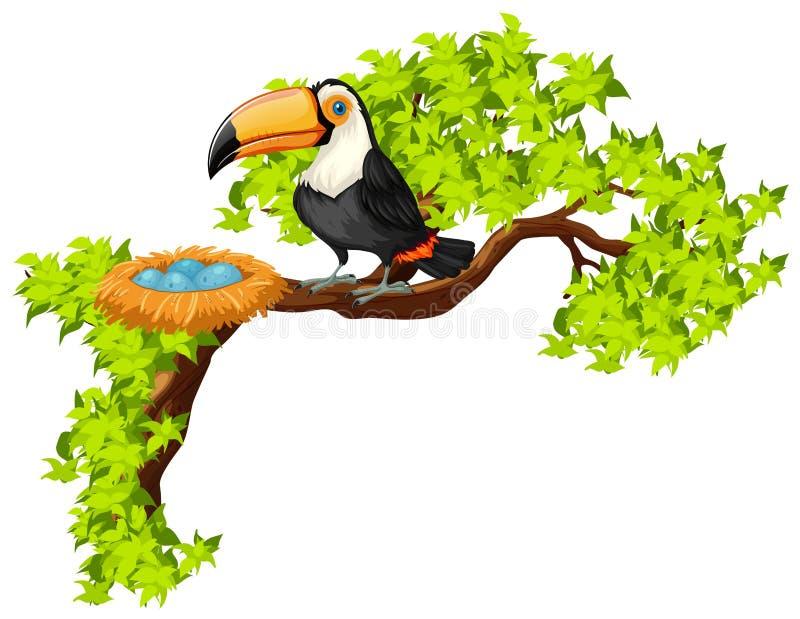 Tukan och rede på trädet vektor illustrationer