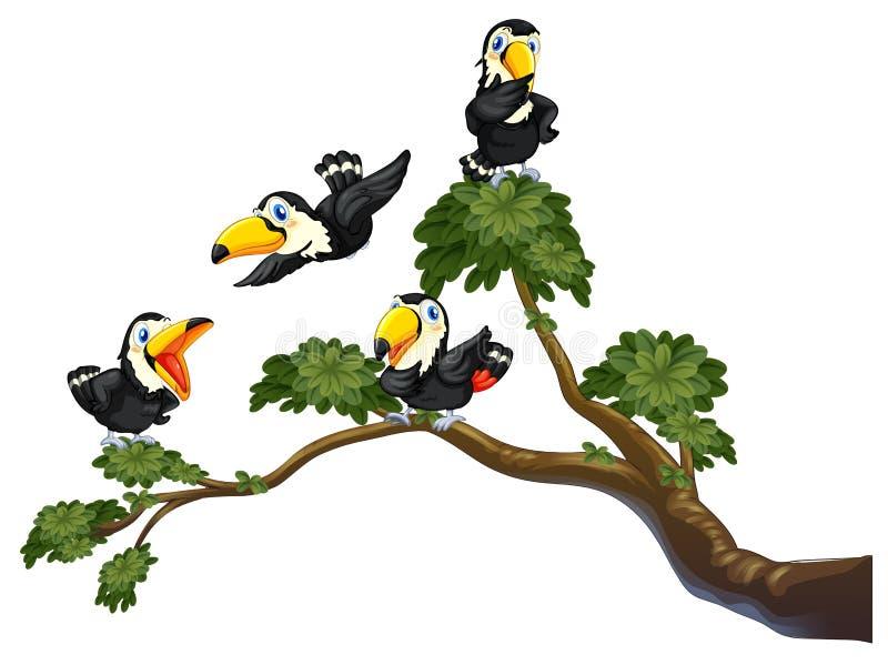 Tukan und Baum vektor abbildung