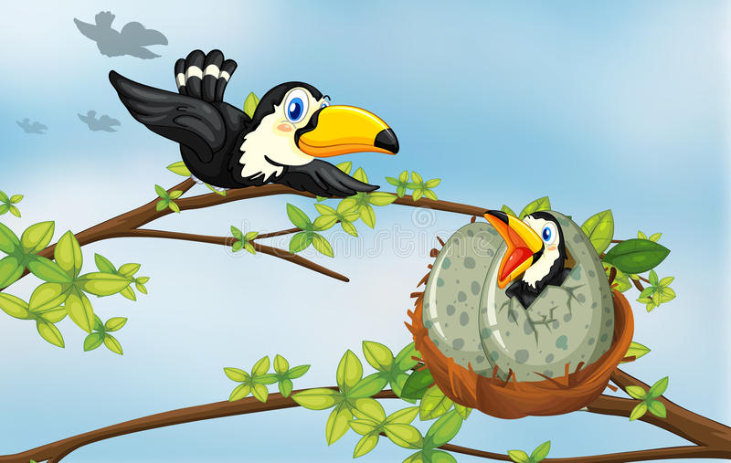 Tukanvögel auf dem Nest lizenzfreie abbildung