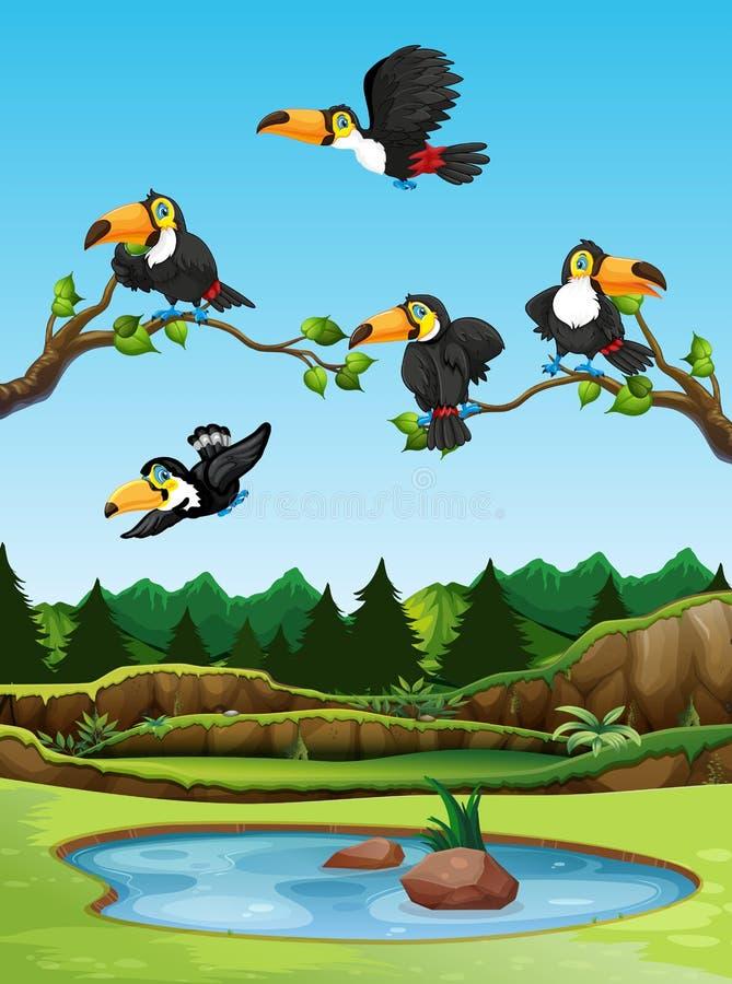 Tukanvogel in der Natur vektor abbildung