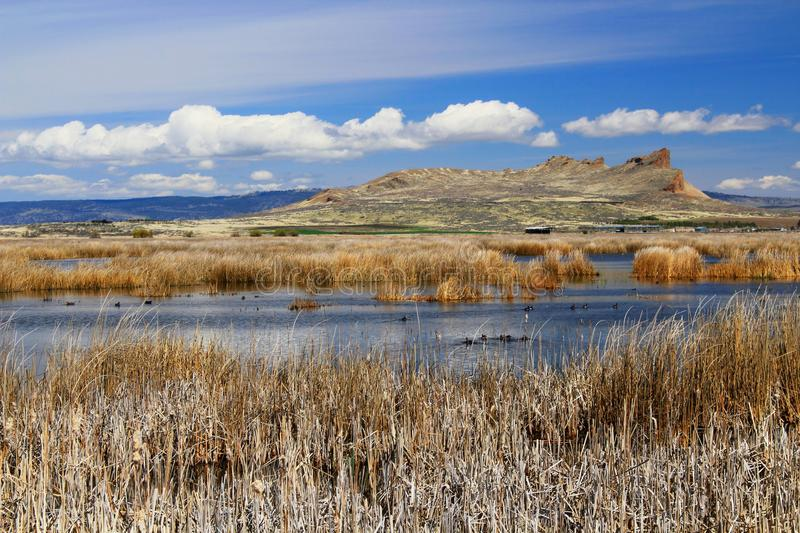 Tule Lake Bird Sanctuary at Lava Beds National Monument, California, USA. Tule Lake, just outside Lava Beds National Monument, is one of the most important royalty free stock image