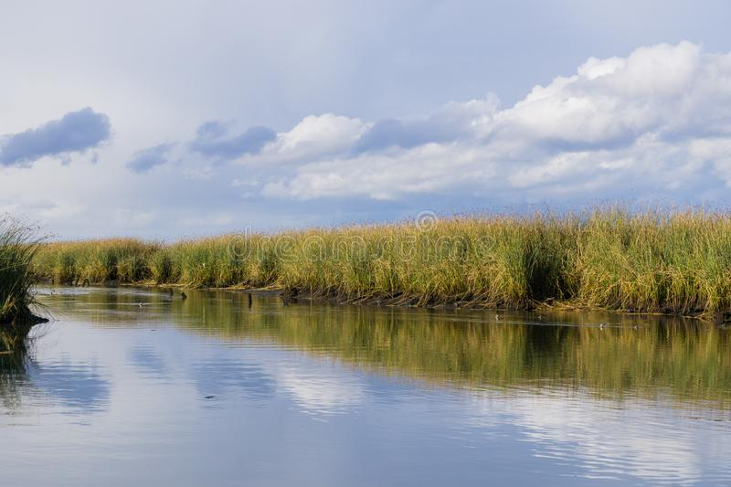 Tule reeds reflected in a salt pond on a cloudy day, Don Edwards Wildlife Refuge, south San Francisco bay, Alviso, San Jose,. California stock image