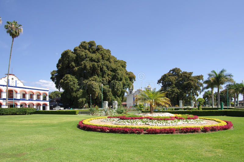 Tule träd i Mexico royaltyfri foto