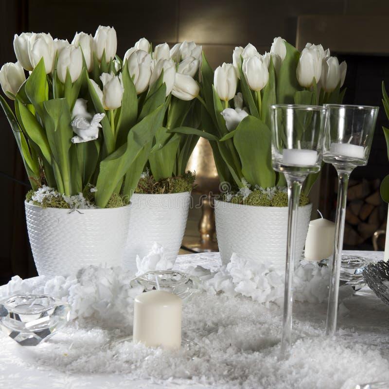 Tulipán blanco. Partido romántico imagen de archivo libre de regalías