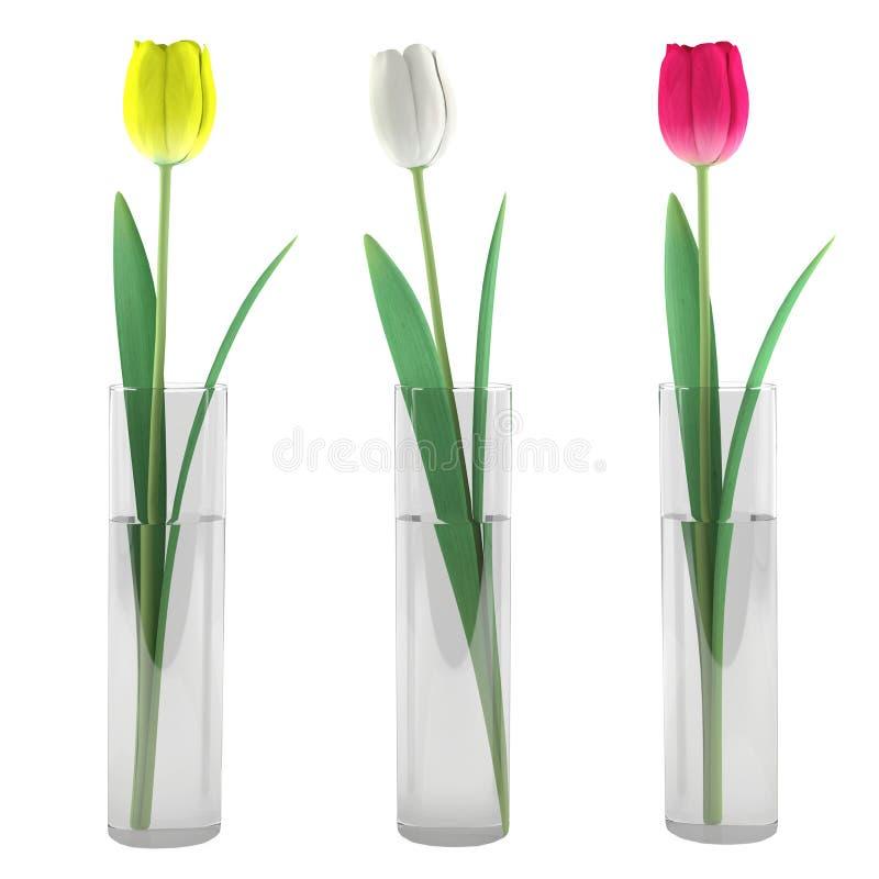 Tulipán en el florero de cristal stock de ilustración