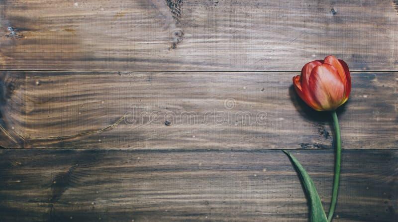 Tulipán en la madera fotografía de archivo