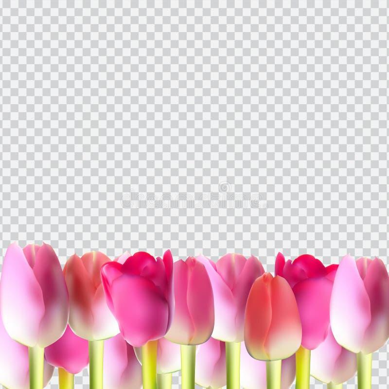 Tulipán realista rosado hermoso en vector transparente del fondo libre illustration