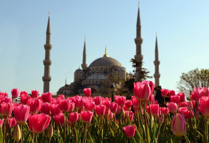 Tulipán rojo de la flor de la mezquita de Ottoman imágenes de archivo libres de regalías