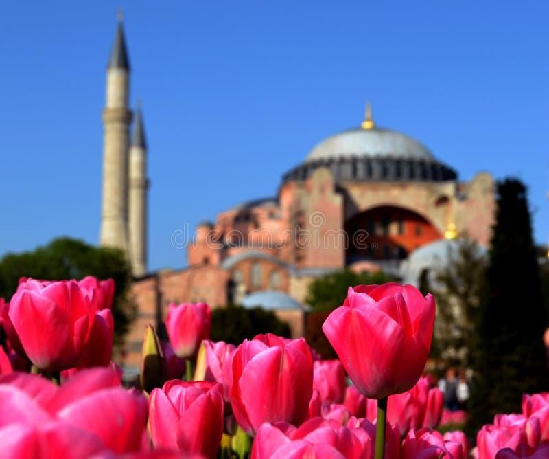 Tulipán rojo de la flor de la mezquita de Ottoman fotos de archivo libres de regalías