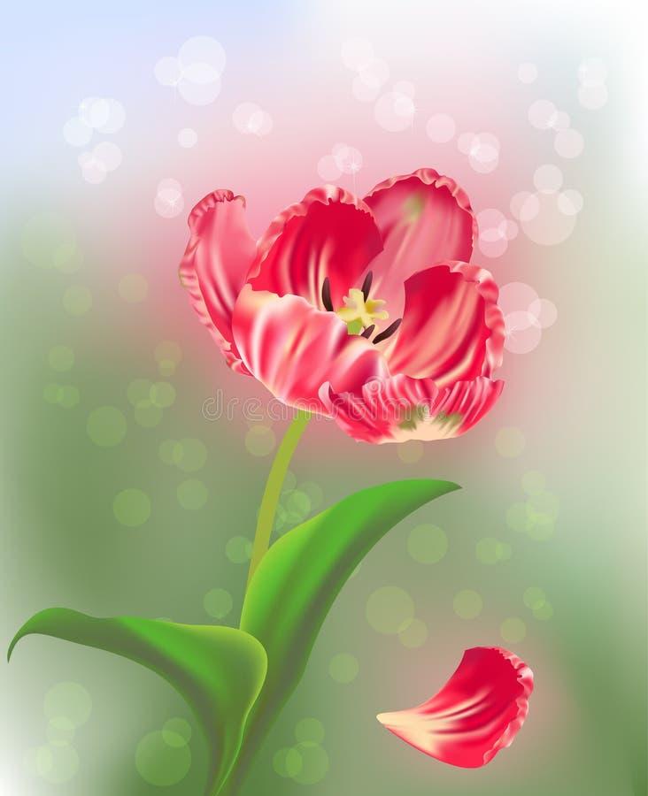 Tulipán rosado en fondo ligero abstracto verde stock de ilustración