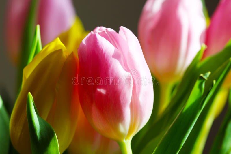 Tulipán rosado y amarillo del ramo foto de archivo
